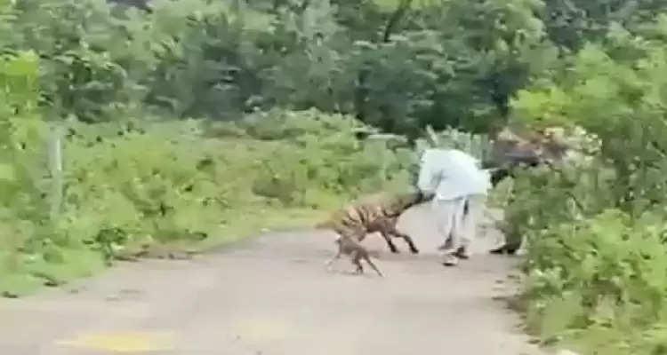 Hyna attack