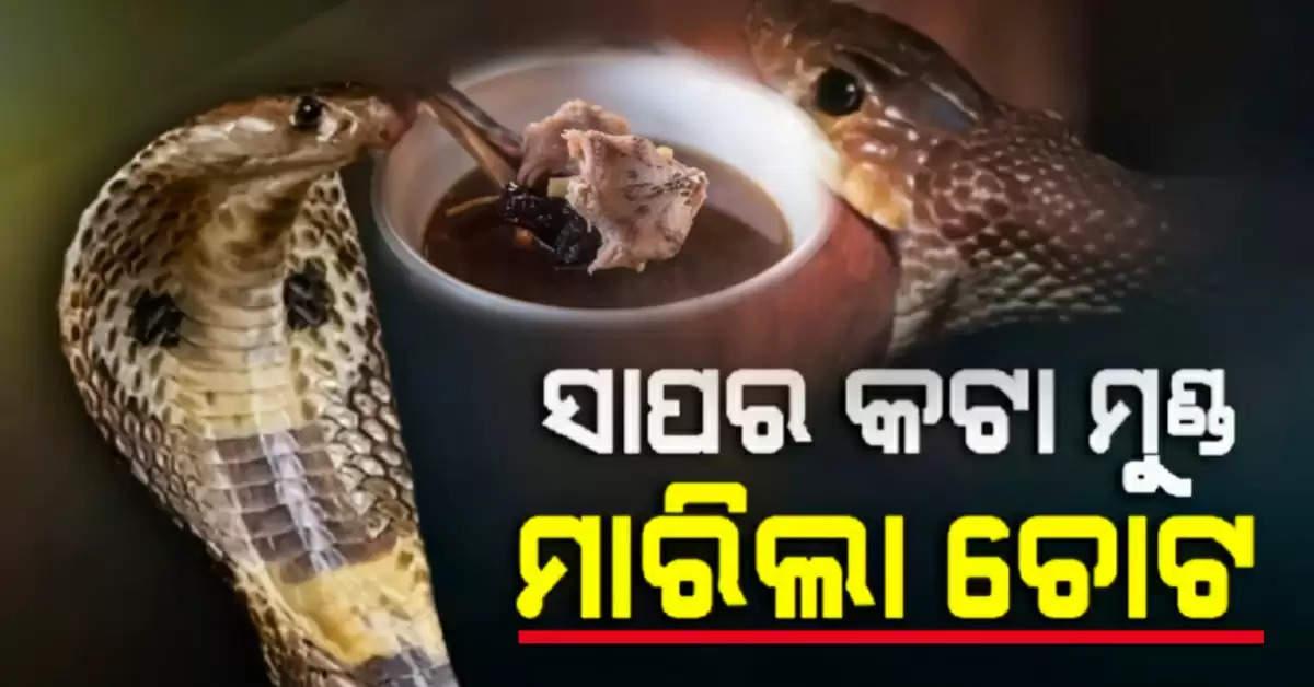 Snake killed chef