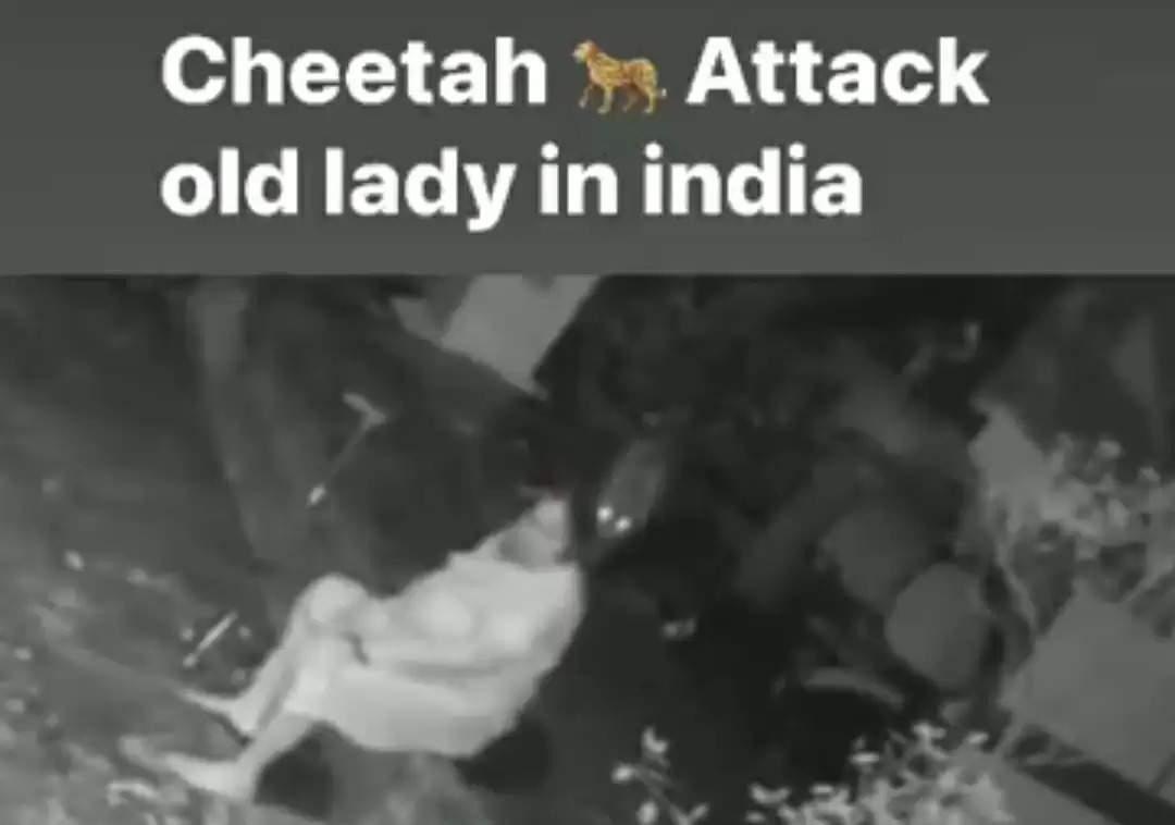 chitah
