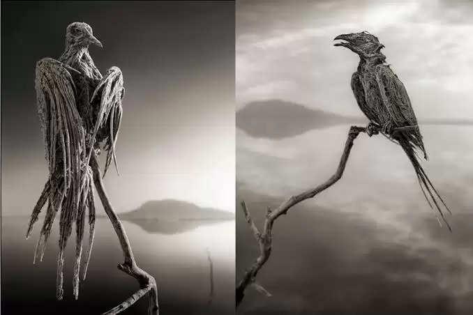 Stone birds