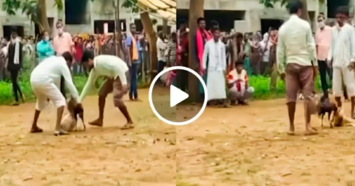 Desi cock fight